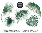 vector palm leaves  jungle... | Shutterstock .eps vector #704149267
