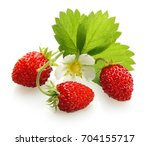 wild strawberry isolated on... | Shutterstock . vector #704155717