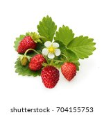wild strawberry isolated on... | Shutterstock . vector #704155753