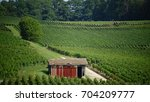 Small photo of Color photo of the Mountain from Reims to France. On the foreground, we perceive an old hut of vineyard.