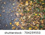 colorful golden background of... | Shutterstock . vector #704259553