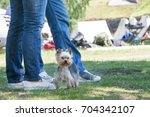 the dog going with owner in... | Shutterstock . vector #704342107