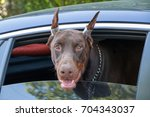 portrait of the mastiff who is... | Shutterstock . vector #704343037