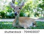 Small photo of Portrait Eld deer