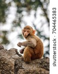Small photo of Macacus baby monkey living in the Swayambu Nath Temple, Kathmandu, Nepal