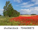 Stock photo poppy field with red poppies papaver rhoeas flanders poppy and german chamomile matricaria 704608873