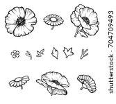 the poppy flower. linear... | Shutterstock .eps vector #704709493