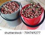 strawberries in a bucket. a... | Shutterstock . vector #704769277