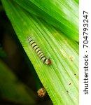 colorful hariry caterpillar ... | Shutterstock . vector #704793247