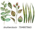 set of watercolor leaves  hand... | Shutterstock . vector #704807863