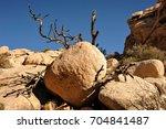Giant Boulders  Dead Tree...