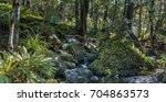 thick bush | Shutterstock . vector #704863573