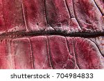 freshwater crocodile belly skin ... | Shutterstock . vector #704984833