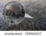 house dust mite   3d rendering | Shutterstock . vector #705004327
