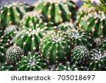 cactus  cactus thorns  close up ... | Shutterstock . vector #705018697