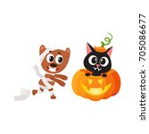 vector flat cartoon funny cute... | Shutterstock .eps vector #705086677