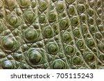 freshwater crocodile belly skin ... | Shutterstock . vector #705115243
