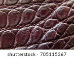 freshwater crocodile belly skin ... | Shutterstock . vector #705115267