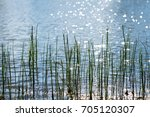 Grass Growing In The Lake