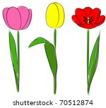 Three Tulips In Hand Drawn...