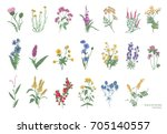 Stock vector collection of beautiful wild herbs herbaceous flowering plants blooming flowers shrubs and 705140557