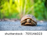 turtle walking on tarmac rural... | Shutterstock . vector #705146023