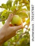 closeup of man farmer hand... | Shutterstock . vector #705197887