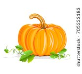 ripe pumpkin. realistic... | Shutterstock .eps vector #705223183