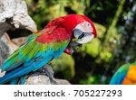 Red Parrot In Rain. Wildlife...