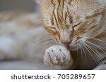 sleepy cat washing himself ... | Shutterstock . vector #705289657