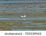 Eurasian Spoonbill  Two Birds...