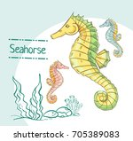 hand drawn seahorse isolated on ... | Shutterstock .eps vector #705389083