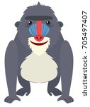 Baboon With Happy Face...