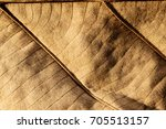 dried leaf texture background. | Shutterstock . vector #705513157