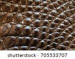 freshwater crocodile belly skin ... | Shutterstock . vector #705533707