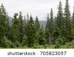 landscape of coniferous forest... | Shutterstock . vector #705823057