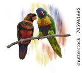 digital painting of  lorikeet... | Shutterstock . vector #705961663