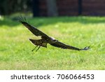 Small photo of A bird of prey flies across the country