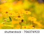 yellow flowers in a meadow... | Shutterstock . vector #706376923