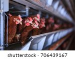 Small photo of Factory Chicken egg production. Red chickens are seated in special cages. Linear perspective. Agribusiness company.