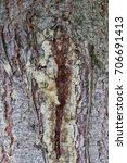 Small photo of The bark of the tree.Macro.