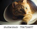 Ginger Cat. Red Kitten Looks...