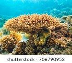 hard corals reef in red sea... | Shutterstock . vector #706790953