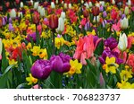 Outdoor Multicolored Flower...