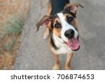 dog playing outside smiles... | Shutterstock . vector #706874653