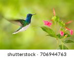bird with red flower.... | Shutterstock . vector #706944763