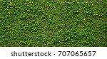 green creeper of bush on wall... | Shutterstock . vector #707065657
