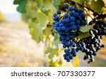 Small photo of Italian vineyards of Langhe near Alba (Piedmont), with grapes ready for harvest