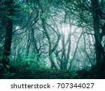 morning forest road in japan | Shutterstock . vector #707344027