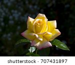 gloriously  magnificent...   Shutterstock . vector #707431897